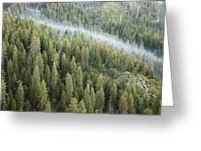 Smoke In Forest Greeting Card