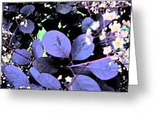 Smoke Tree Blues Greeting Card