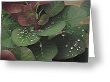 Smoke Tree Drops Greeting Card
