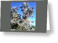 Smoke Tree In Bloom With Blue Purple Flowers Greeting Card