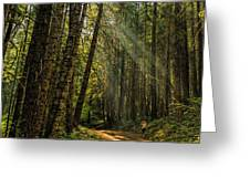 Smokey Forest Greeting Card