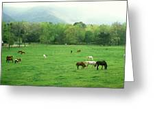 Smokies Horses Greeting Card