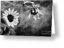Smoking Sunflowers Greeting Card