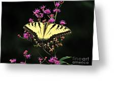 Smoky Mountain Butterfly Greeting Card