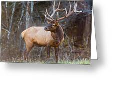 Smoky Mountain Elk II - North Carolina's Cataloochee Valley Wildlife Greeting Card