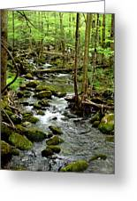 Smoky Mountain Stream 2 Greeting Card