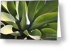 Smooth Agave Greeting Card