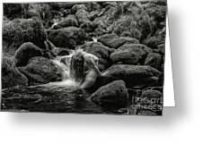 Smooth Curves. Greeting Card