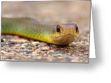 Smooth Green Snake ... Montana Art Photo Greeting Card
