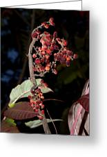 Smooth Sumac Flower Greeting Card
