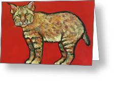 Smug Bobcat Greeting Card by Carol Suzanne Niebuhr