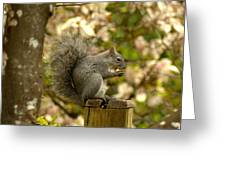 Snack Time Greeting Card by Scott Gould