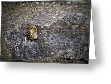 Snail At Ballybeg Priory County Cork Ireland Greeting Card