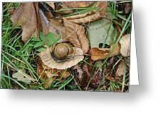 Snail At Home Greeting Card