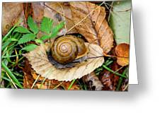 Snail Home Greeting Card