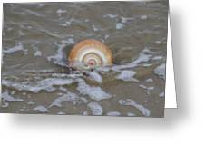 Snail In The Surf Greeting Card