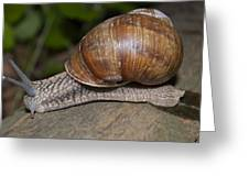 Snail On A Log Greeting Card