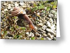 Snail On Rocks Greeting Card