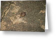 Snail On Sidewalk Greeting Card