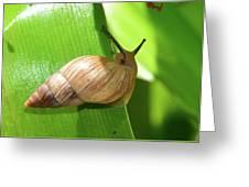 Snail Work B Greeting Card