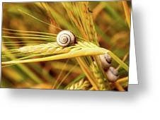 Snails On Wheat Greeting Card