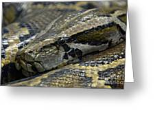 Snake At Rest. Greeting Card