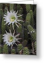 Snake Cactus Flowers Greeting Card