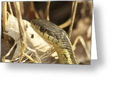 Snake Eye Greeting Card