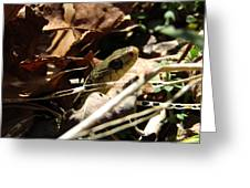Snake In Nature Greeting Card