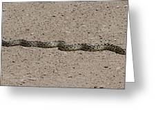Snake On The Road Greeting Card