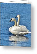 Snake River Swans Greeting Card