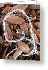 Snake Skeleton Greeting Card