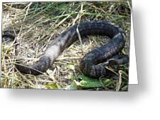 Snake So Pretty Greeting Card