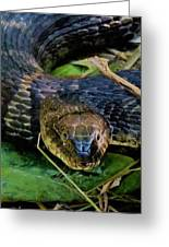 Snakehead Greeting Card
