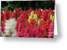 Snap Dragon Flowers Greeting Card by Tracy Hall