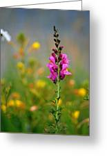 Snap Dragon Greeting Card