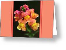 Snapdragon Flowers With Design Greeting Card