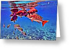 Snapper Feed Greeting Card