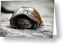Snapping Turtle Greeting Card