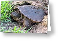 Snapping Turtle Laying Eggs Greeting Card