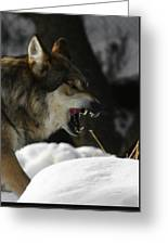 Snarling Wolf Greeting Card
