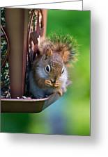 Sneaky Red Squirrel Greeting Card