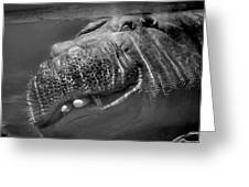 Sneaky Underwater Hippo Grin Greeting Card