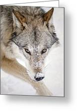 Sneaky Wolf Greeting Card