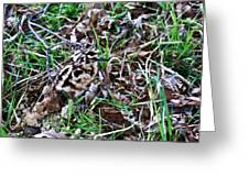 Snipe In Camouflage 2 Greeting Card
