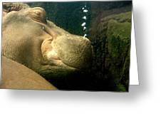 Snoozing Hippo Greeting Card