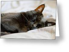 Snoozy Kitty Greeting Card