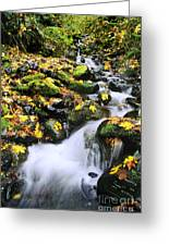 Snoqualmie National Fores Greeting Card