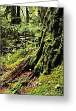 Snoqualmie National Forest Greeting Card
