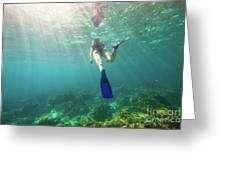 Snorkeling In Coral Reef Greeting Card